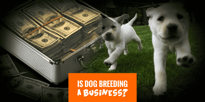 Is dog breeding a business? When is dog breeding considered a business?