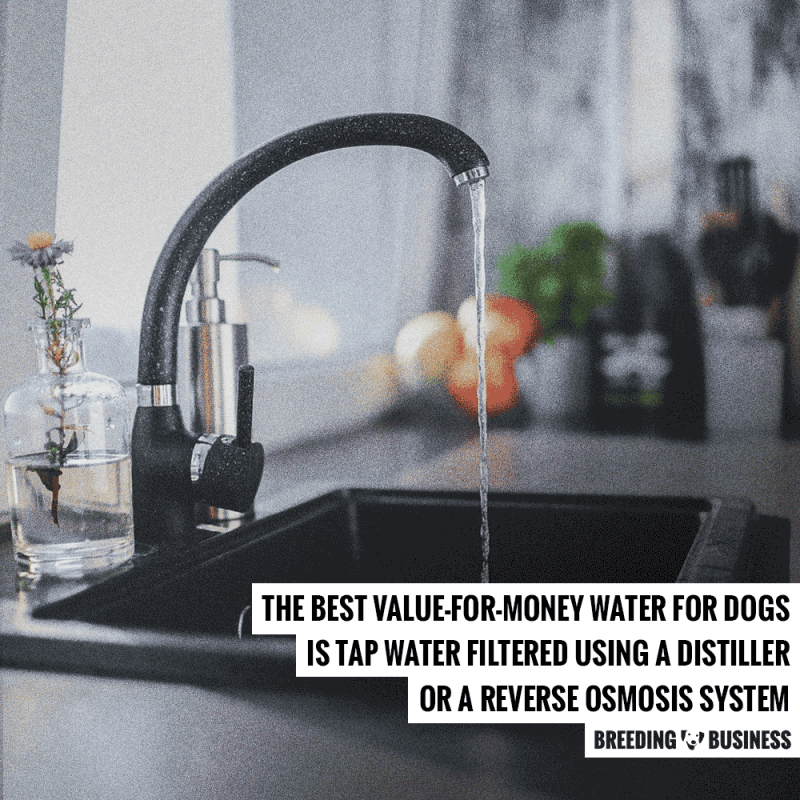 filtered water for dogs