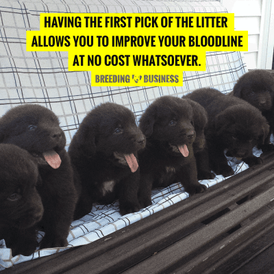 First Pick of the Litter — Definition, FAQ, Puppies to Pick