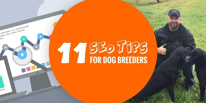 11 Tips For Your Kennel Website To Rank #1 On Google
