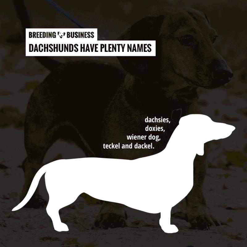 dachshund names