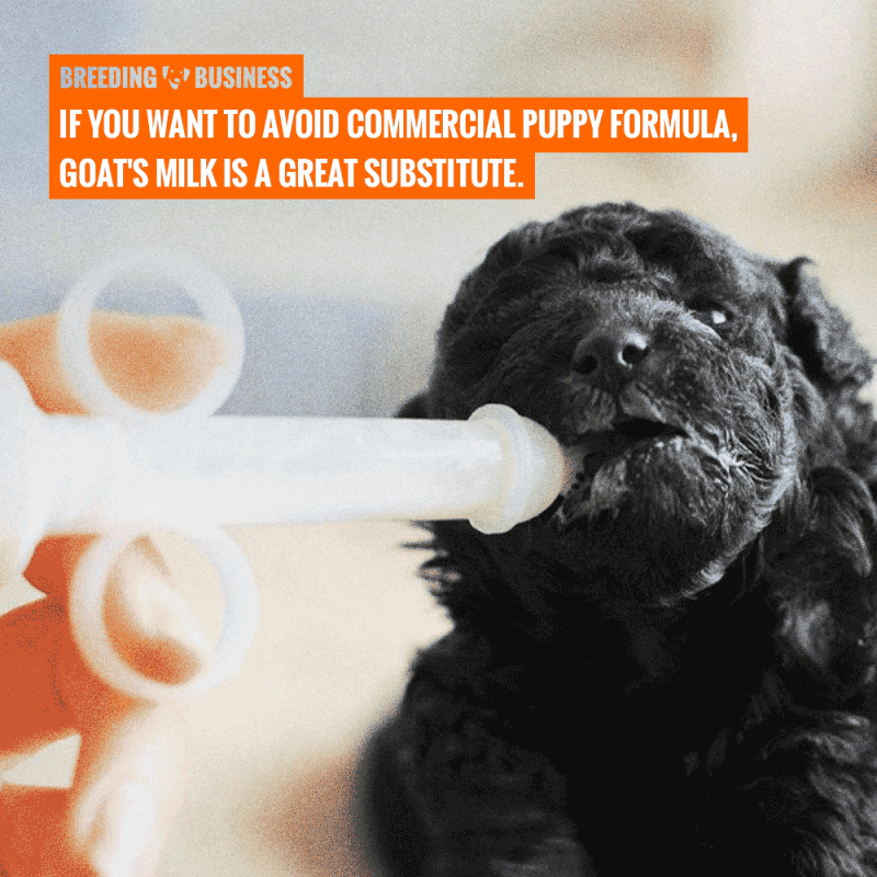 goats milk for puppy formula