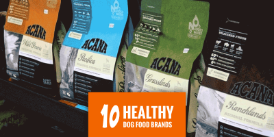 Top 10 Most Popular Healthy Dog Food Brands
