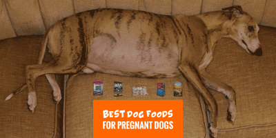 Top 6 Best Dog Foods for Pregnant Dogs