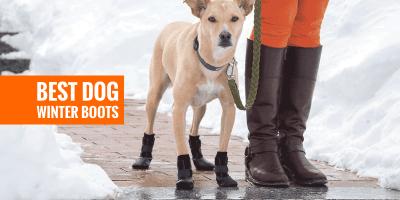 Top 6 Best Dog Winter Boots