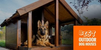 Top 10 Best Outdoor Dog Houses — Wired, Wooden, Foldable!