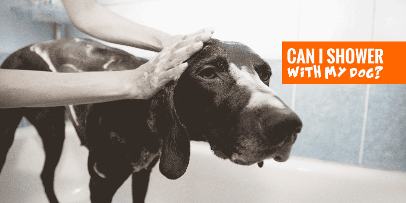 Can I Shower With My Dog?