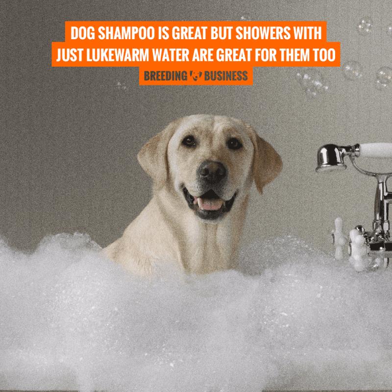 dog shampoo lukewarm water