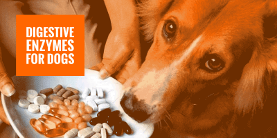 Digestive Enzymes For Dogs — Definition, Reviews, Buying Guide & FAQ
