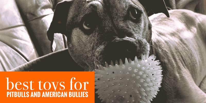 10 Best Toys For Pitbulls & American Bullies