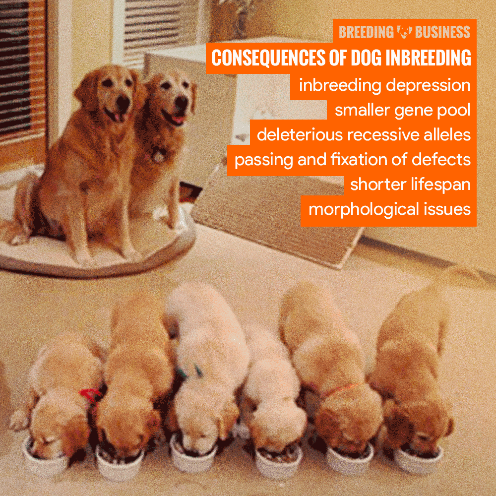 Consequences of Dog Inbreeding