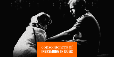 Consequences of Dog Inbreeding