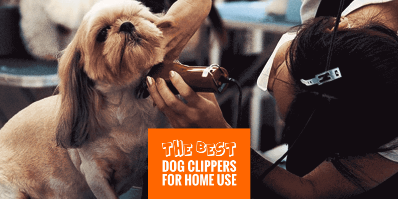 Best Dog Clippers for Home Use