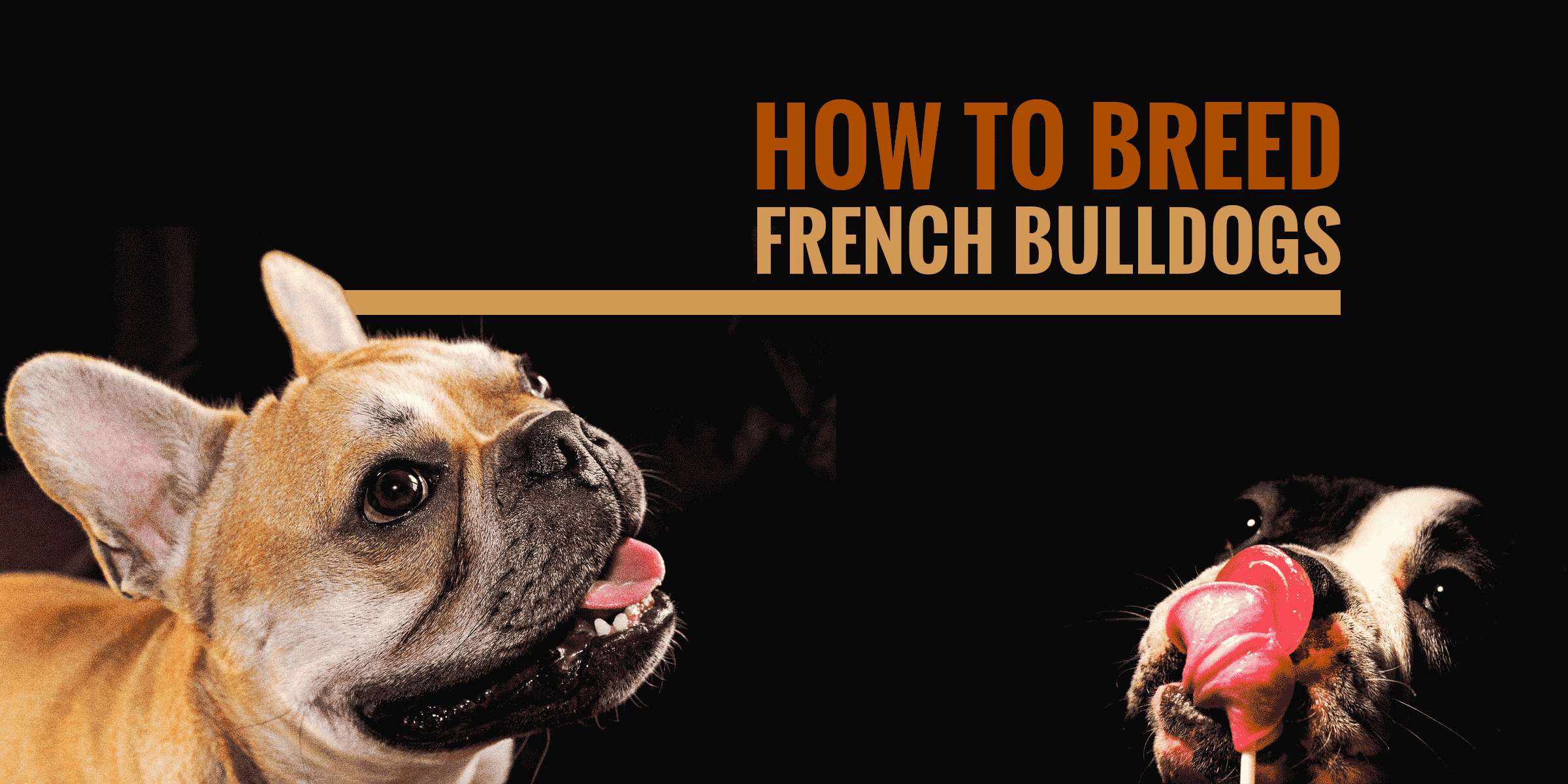 How to Breed French Bulldogs recommendations