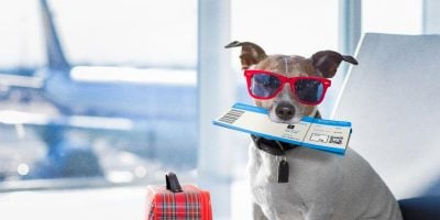 prices of airline tickets for dogs