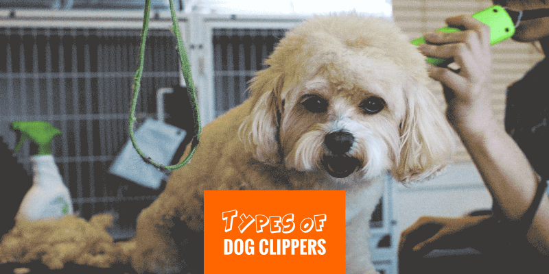 Different Types of Dog Hair Clippers