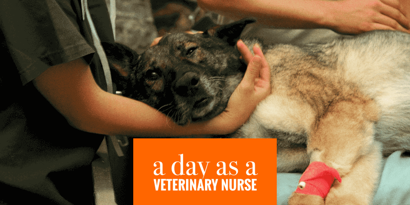 A Day in the Life of a Veterinary Nurse