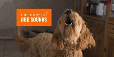 Different Meaning of Dog Sounds