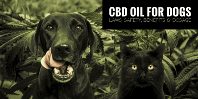 CBD Oil for Dogs — Laws, Safety, Benefits & Dosage