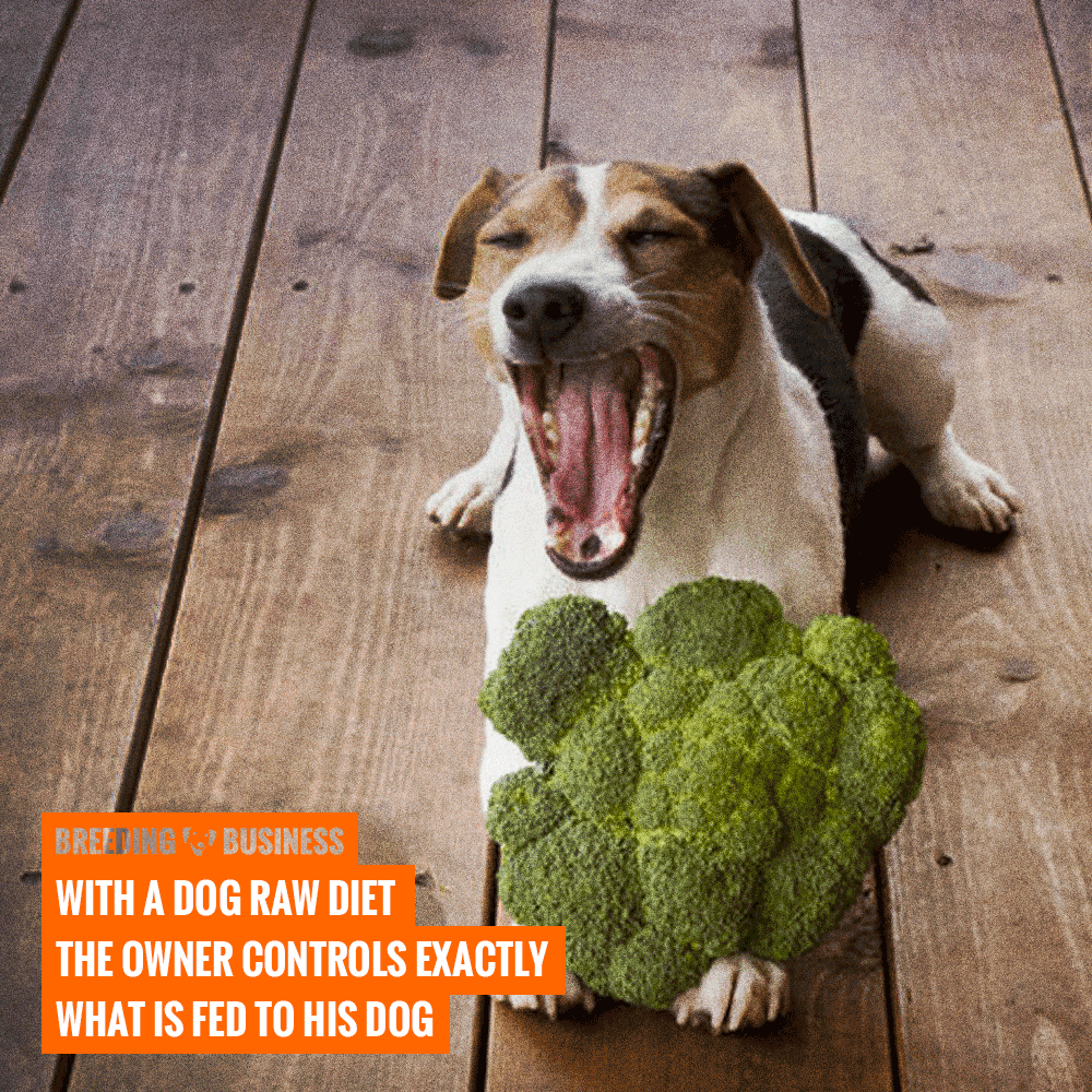 control ingredients with a dog raw diet