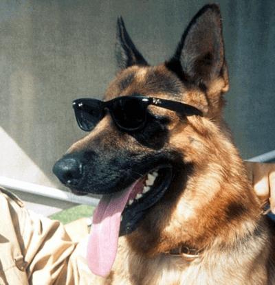 Gunther IV (rich dog)