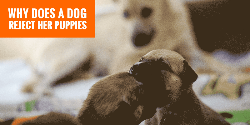 Mother Dog Rejecting Her Puppies — Signs, Causes and Solutions