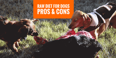 Benefits and Disadvantages of a Raw Dog Diet