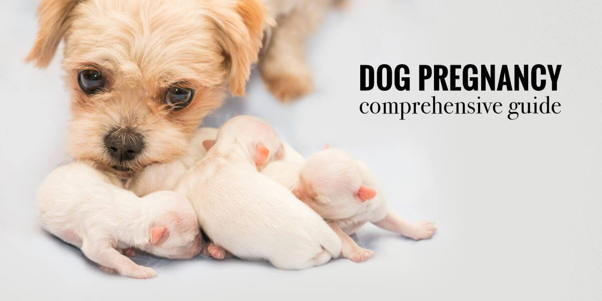 Dog Pregnancy — Signs, Stages, Labor, Risks, Dystocia & FAQ