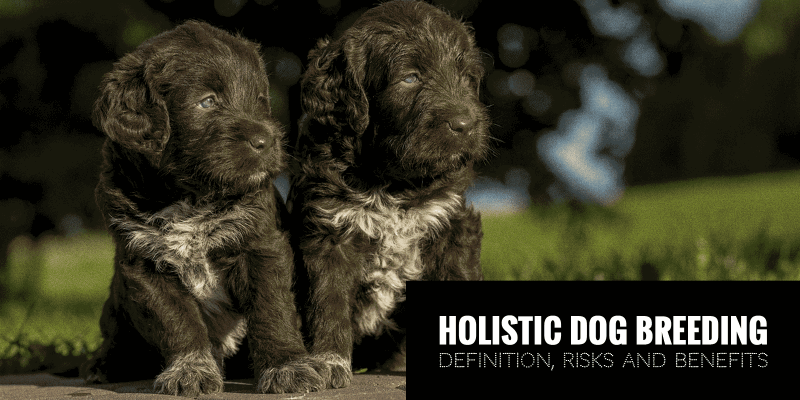 Holistic Dog Breeders