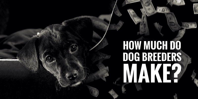 How Much Do Dog Breeders Make?