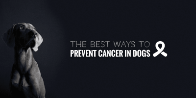 Top 10 Tips to Prevent Cancer in Dogs