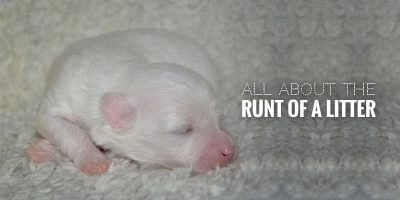 The Runt of the Litter — Definition, Health Implications & FAQ