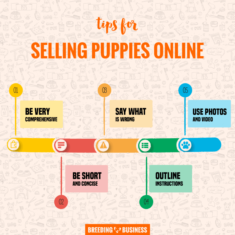 How to Sell Puppies Online — Breeding Business