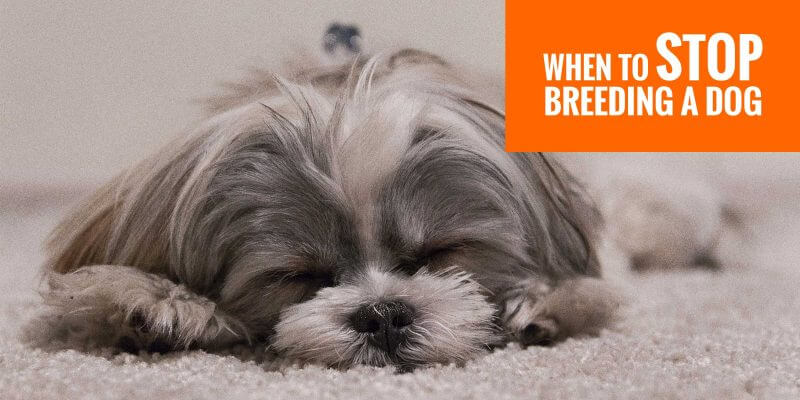 when to stop breeding dogs