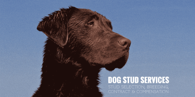 Dog Stud Services — Stud Selection, Stud Fee, Contract & Compensation