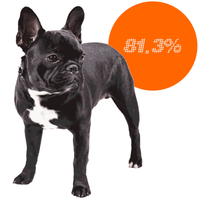 french bulldog c section top 10 dog breeds that frequently need c sections 9401