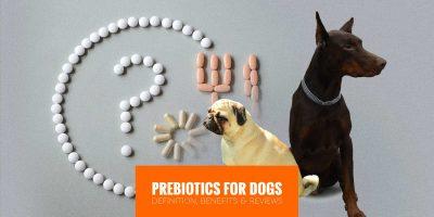 Prebiotics for Dogs — Definition, Benefits, Risks & Best Reviews