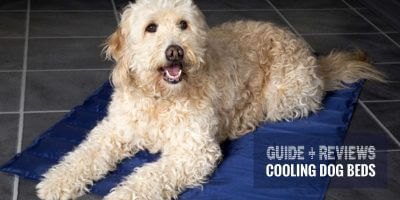 best dog cooling beds
