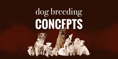 Important Dog Breeding Concepts — Canine Genetics, Heredity, Genotype, Inbreeding, Mutations, etc.