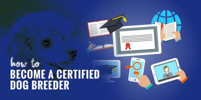 How to Become a Certified Dog Breeder