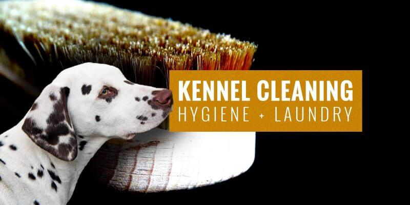 kennel cleaning tips