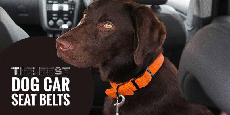 Best Dog Seat Belt >> Top 5 Best Dog Car Seat Belts Reviews Legislation Tips