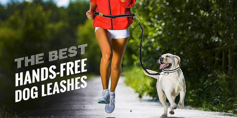 Best Hands-Free Leashes for Dogs