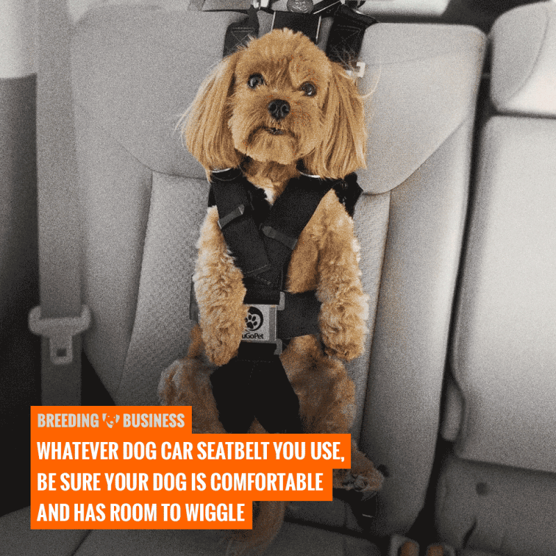 Top 5 Best Dog Car Seat Belts