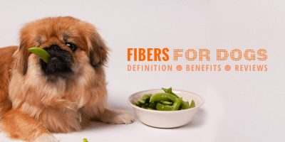 Fibers for Dogs
