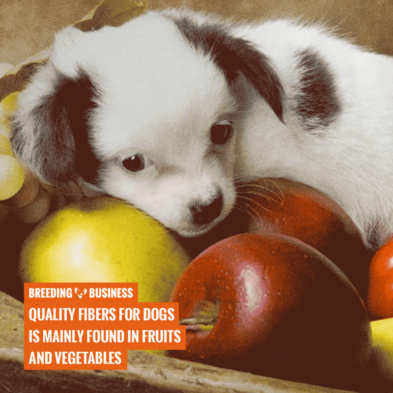 dog fibers in fruits and vegetables