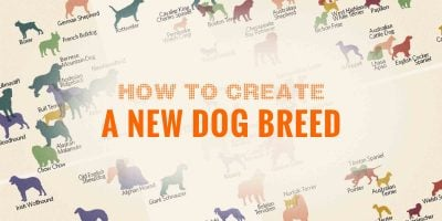 How to Create a New Dog Breed