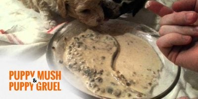 Puppy Mush & Puppy Gruel Recipes