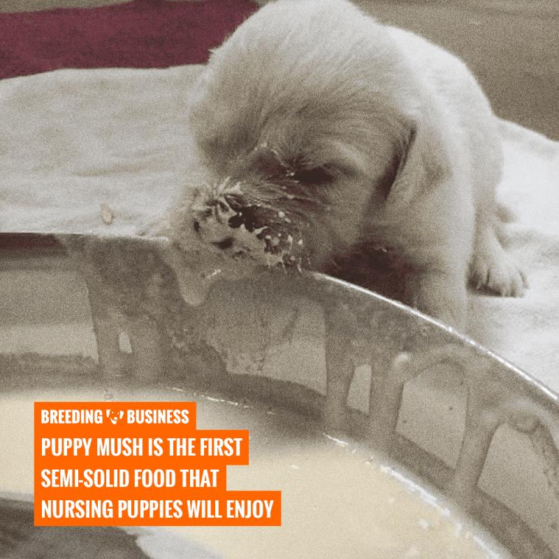 puppy gruel vs puppy mush