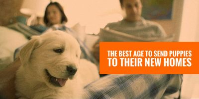 best age to send puppies homes